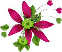 Fleurs 381