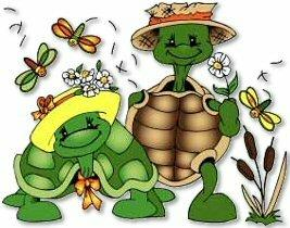 Tortues - Tortue rigolote ...